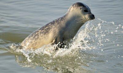 Wat zijn de grootste dieren in onze Noordzee?