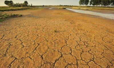 Droog, droger, droogst: verandert België stilaan in een woestijn?