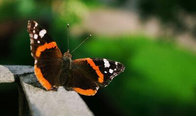 5 tips voor vlinders hoog op je balkon