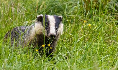 De allerbeste tips & tricks om wilde dieren te spotten