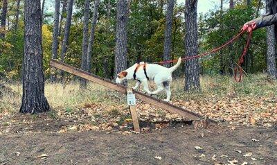 Uitgetest: Snuffeltocht voor liefhebbers van honden en natuur