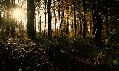 Druk op het bos door Coronawandelaars