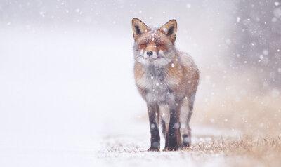 Quiz: Over wintervacht & winterslaap