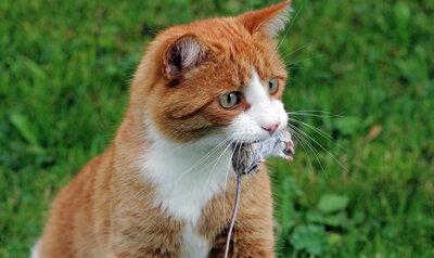 Katten jagen minder vaak met deze tips