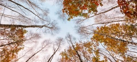 vilda-101894-blik-op-boomkruinen-in-de-herfst-jeroen-mentens-800-px-45106.jpg