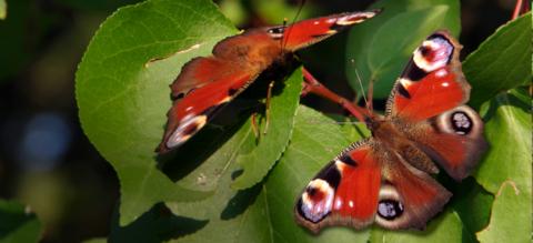 header-vlinders-on.png