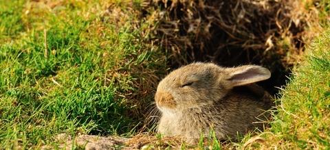 Slapend konijn aan konijnenpijp