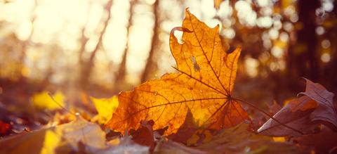 esdoornblad-herfst-vallende-bladeren-onze-natuur.jpg