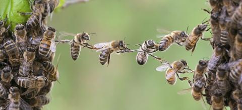 bijen-kolonie-democratie-onze-natuur.jpg