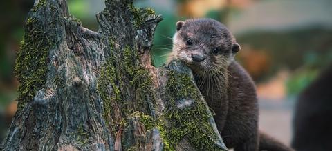 otter-onze-natuur.jpg