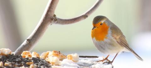 roodborstje-winter-tuin-header.png