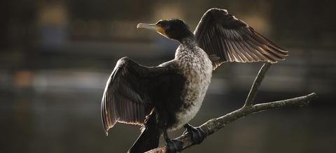 dd02-watervogels-header-v2.jpg