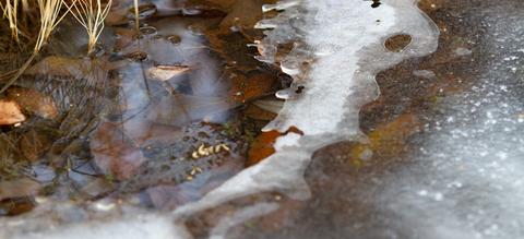 deels-bevroren-plas-of-vijver-waterdieren-ijs-onze-natuur.jpg