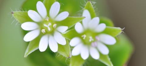 vilda-29013-bloempjes-van-vogelmuur-rollin-verlinde-1900-px-51306.jpeg