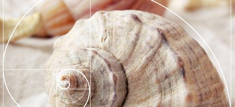 fibonacci-gulden-snede-patronen-in-de-natuur.jpg