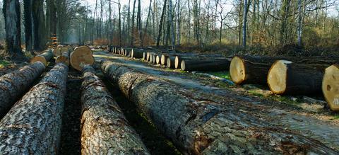 bw16-houtpark-header.jpg