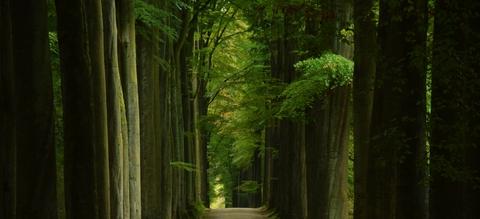zonienwoud-beuken-aangepast.jpg