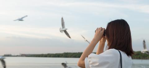 vogels-spotten.jpg