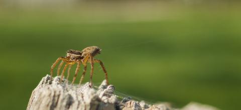 ib210-vliegendespinnen.jpg