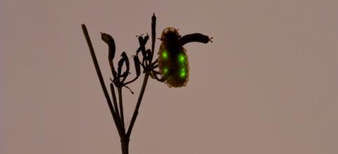 kleine-glimworm-16-9.jpg