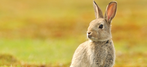 konijn-header.jpg