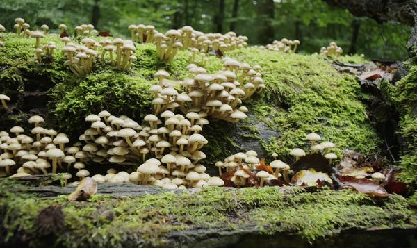 Tienduizend paddenstoelen