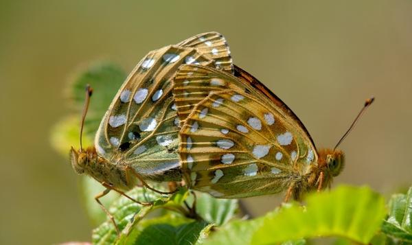 Over rupsensoep en vlinderseks