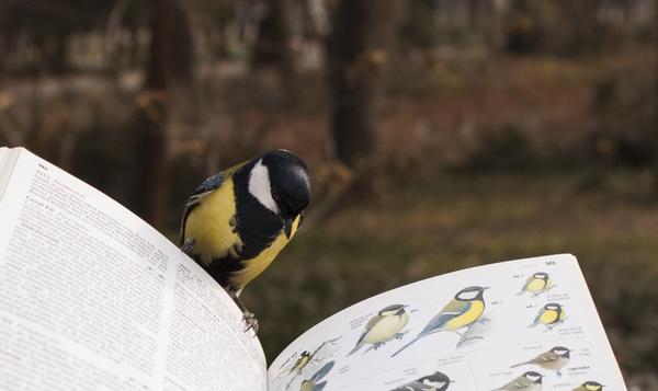 Denken vogels zoals mensen?