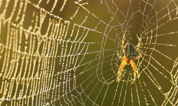Spinnen in alle maten en kleuren