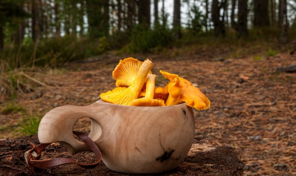 Eetbare paddenstoelen in Onze Natuur
