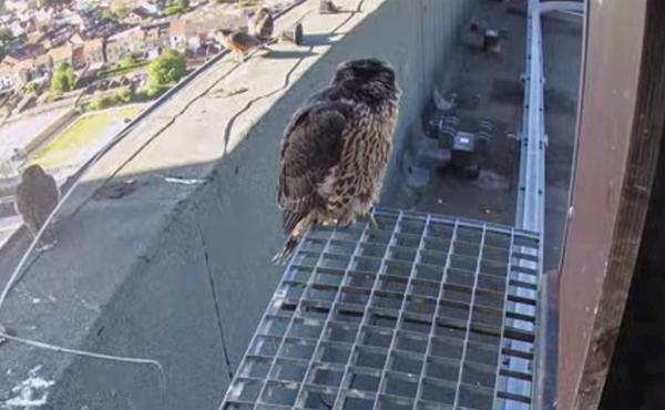 Bekijk ook de nestingang!