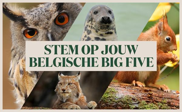 Stem op jouw Big Five van België