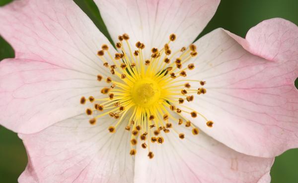 Hoe herken je een cultivar?