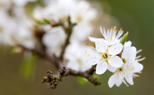 Voorbeelden van lente- en herfstbloeiers
