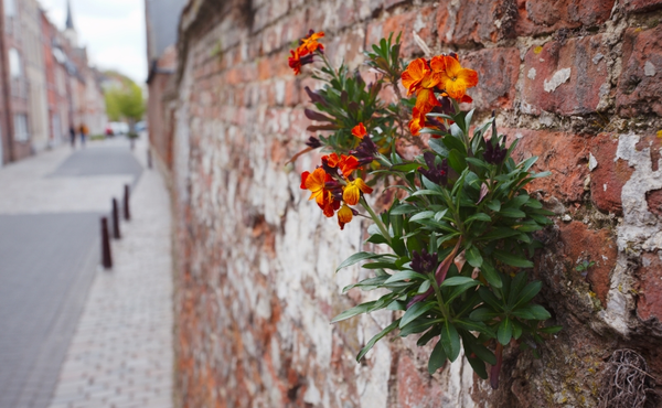 Florachallenge #5: Zoek 3 muurplantjes en inspecteer ze met je DIY vergrootglas
