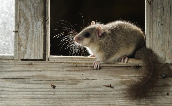 Nachtchallenge #2: Spot kleine zoogdieren met een DIY sporenval