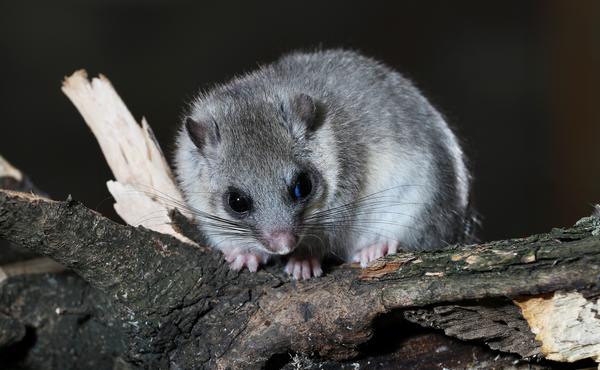 Nachtchallenge #4: Lok verschillende dieren met je nachtdierenbuffet!