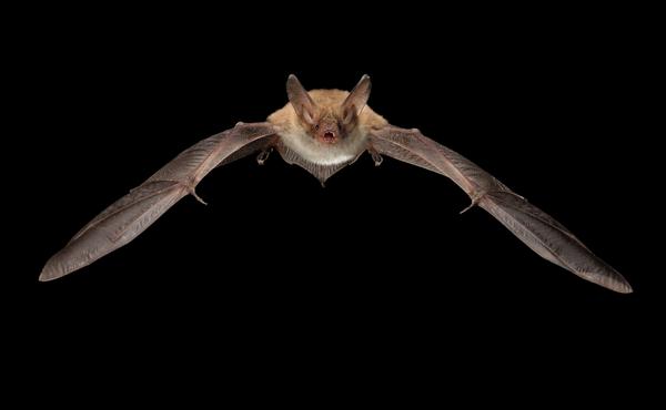 Nachtchallenge #5: Speel eens met een vleermuis