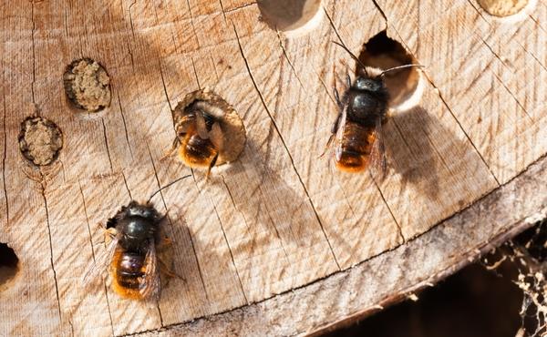 Reddingsactie #4: Maak een schuilplaats voor insecten