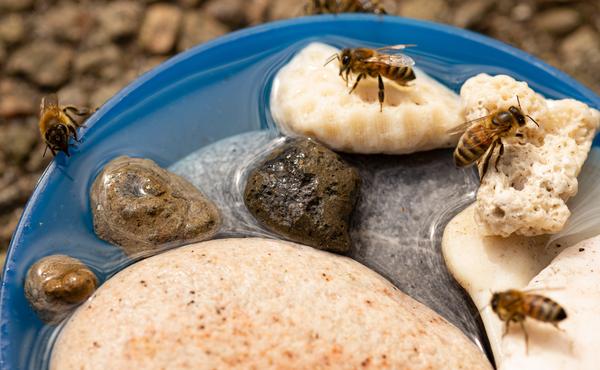 Reddingsactie #2: Insectencafé