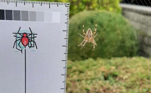 11. Ga op spinnenjacht in en rond het huis (voor de wetenschap)