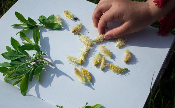 1. Maak een herbarium van zomerbloemen