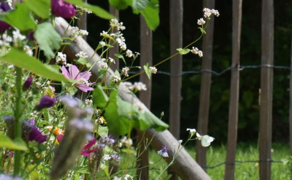 12. Maak van je tuin een paradijs voor vlinders