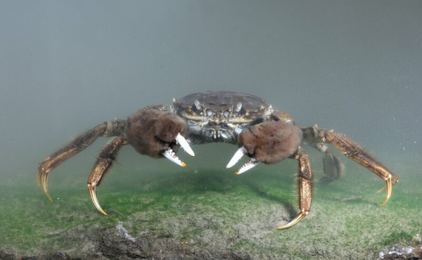 5. Krabben in troebel water