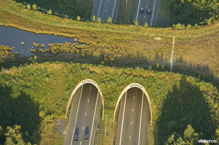 Een voorbeeld van een ecoduct in Limburg over de E314