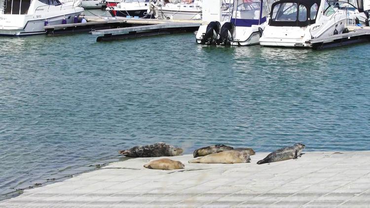 bw07-zeehonden02.jpg
