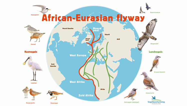 infographic-trekvogels.jpg