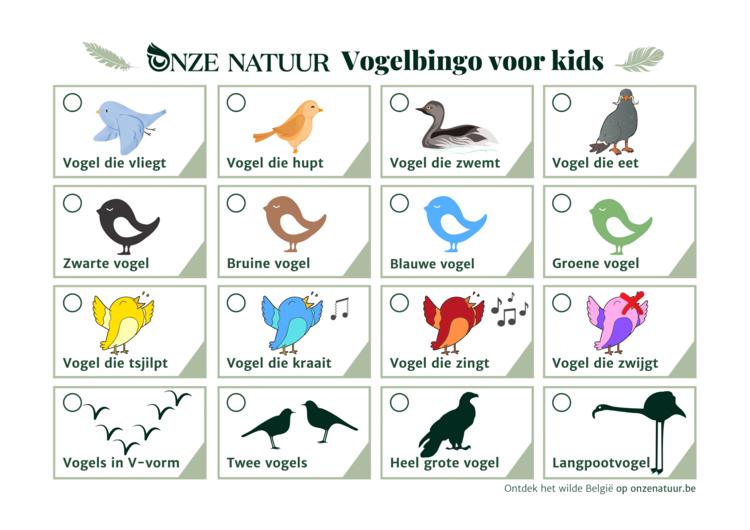 vogelbingo-voor-kids.png