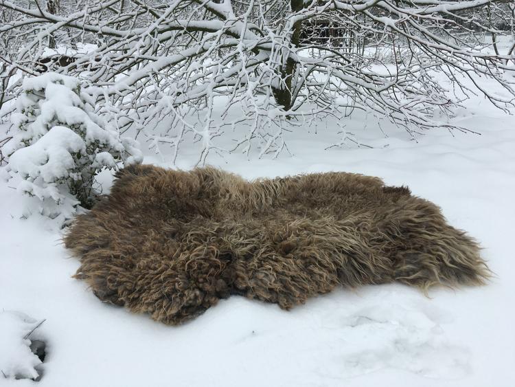 Gevilte schapenvacht met wol van Oud-Kempense schapen