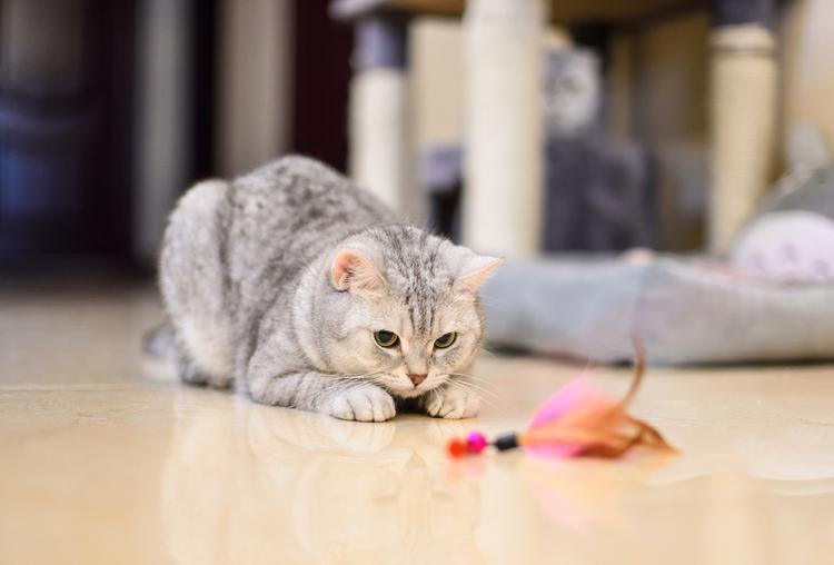 kat-speelt-met-hengel.jpg